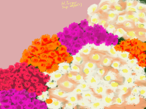 Colourful Mums.  September 29, 2014