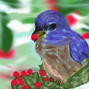 Blue Bird Eating Berries.  February 23/2015