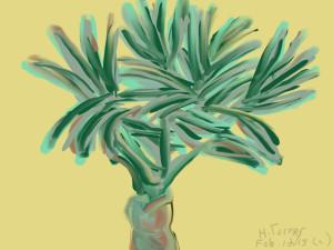 Date Palm Tree.  Boca. February 12/2015