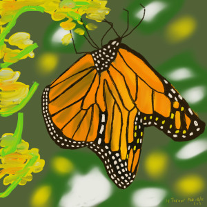 Monarch Butterfly.  February 17/2015