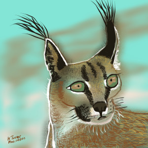 Caracal Cat.  March 11/2015