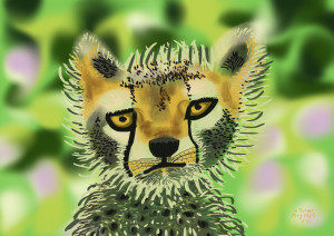 Cheetah Cub.  August 25, 2015