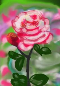 Pink_Rose._May_172016